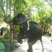 rayna varhu slon v tayland