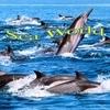 Sea World Sounds