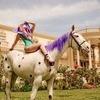 Paparazzi - Horse version